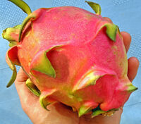 Dragonfruit1 edited-1