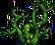 Thornroot Weed (101)