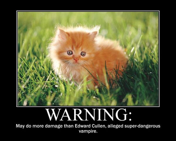 File:Motiv - kitten scarier than edward.jpg