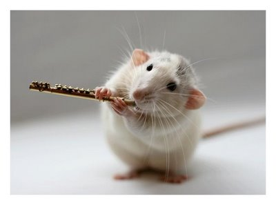 File:Rat with flute.jpg