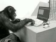 Monkey on computer