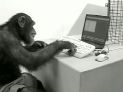 File:Monkey on computer.jpg