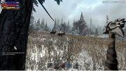 SL Deer