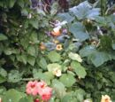 Growing and gardening