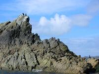 Cormorants off Ramsey Island