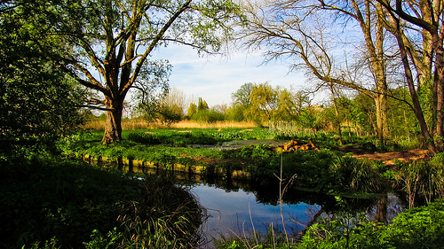 File:River Wandle.jpg
