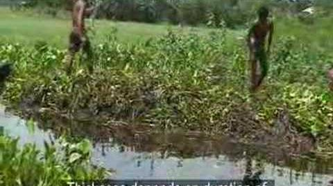 CLACC Bangladesh BAIRA - The Floating Gardens