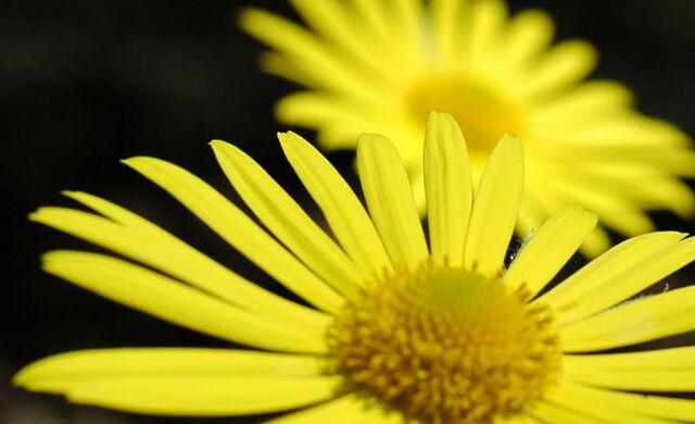 File:Slider-yellowflowers.jpg