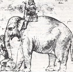 Elefant Hanno