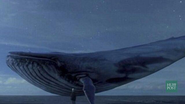 Datei:Blauer Wal.jpg
