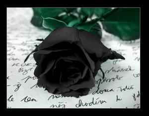 Datei:Rose.jpg