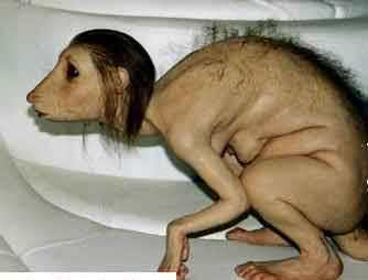 Datei:Rattenmädchen.jpg