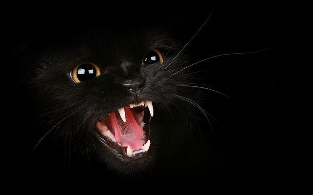 Datei:Schwarze Katze.jpg