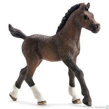 Arabian Foal 2014