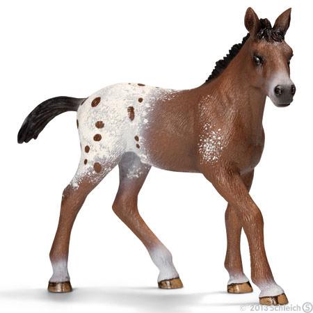 File:Appaloosa Foal.jpg