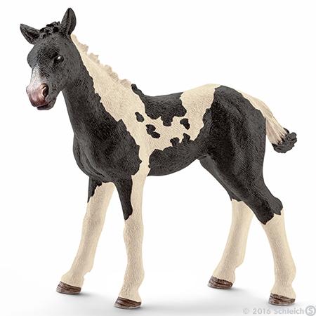 File:Pinto Foal 2016.jpg