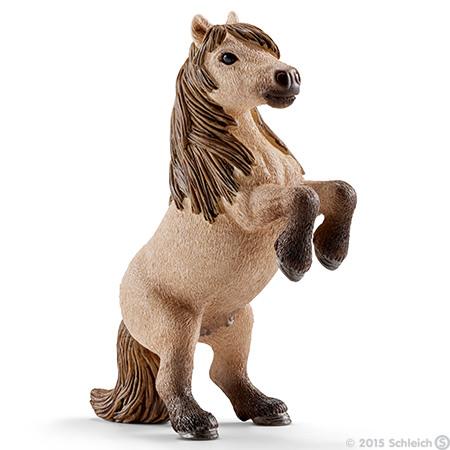 File:Mini Shetty Stallion.jpg