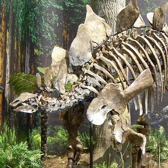 File:Stegosaurus Cropped.jpg