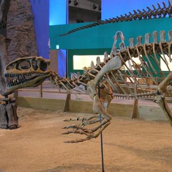 File:Metricanthosaurus Skeleton.jpg