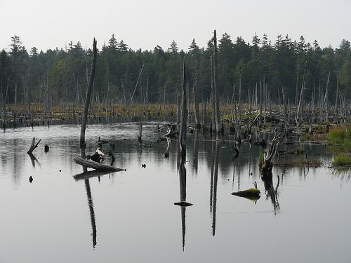 File:Caribou Trail.jpg