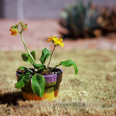 File:Just another potted plant.jpg