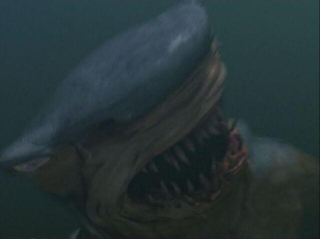 File:Hammerhead Closeup.JPG