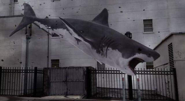 File:Shark1.JPG