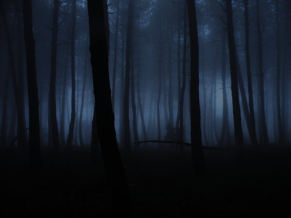 File:Pine forest fog by AVENGED7X.jpg