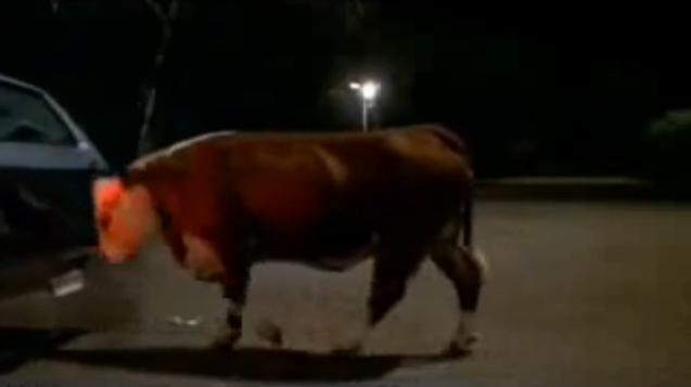 File:Burger King Cow Pushing Car.png
