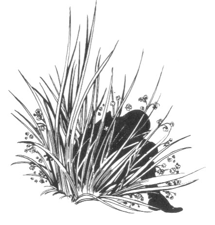 File:Sleeping Grass.jpg
