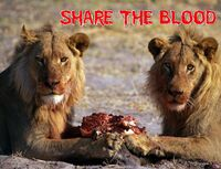 Share the blood cd