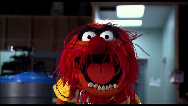 File:Animal from Muppets Most Wanted Theatrical Teaser Trailer.jpeg