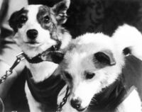 Belka and Strelka Russian Space Dogs