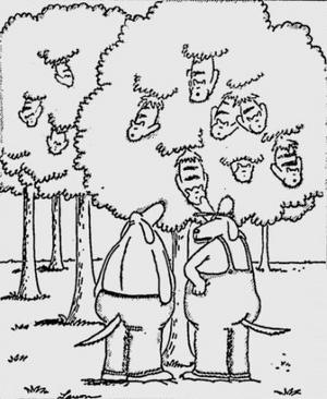 1986-01-04 - 'Kitty Trees'