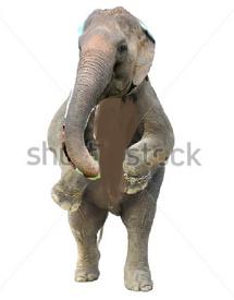 Tusky the Elephant tekken 7
