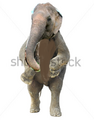 Tusky the Elephant tekken 7.png