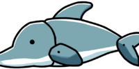 Dolphin Pup