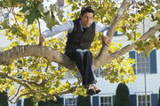 9x2 JD in a tree