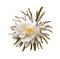 C0348 Rare Flowers i05 Night-blooming Cereus