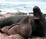 File:R e. seals.png
