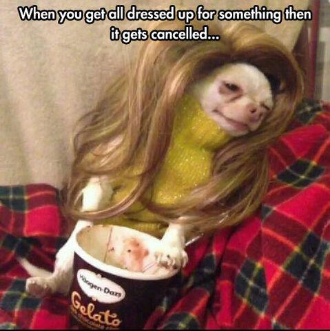 File:Funny-dog-dressed-ice-cream-wig.jpg