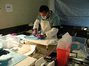 DNA collection PA crash site