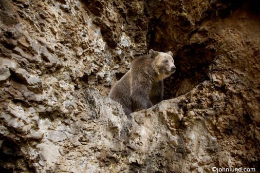 File:Brown Bear.jpg