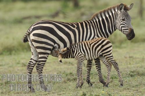 File:Foals.jpg