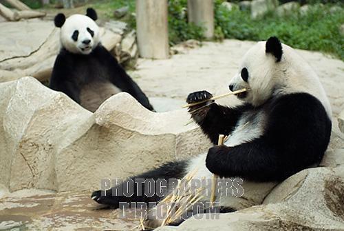 File:Endangered Species.jpg