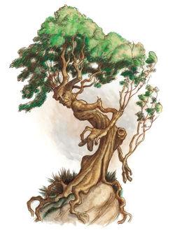 Drzewiec.jpg