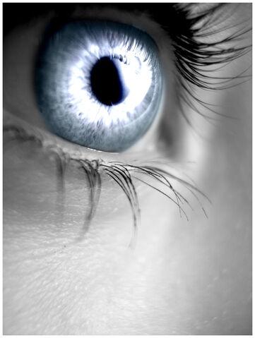 File:Silver Eye by Sugargrl14.jpg
