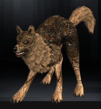 Wolf 03 1