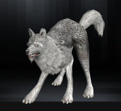 Wolf 09 1
