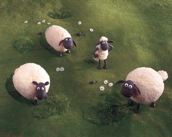 File:Sheepyard1.jpg